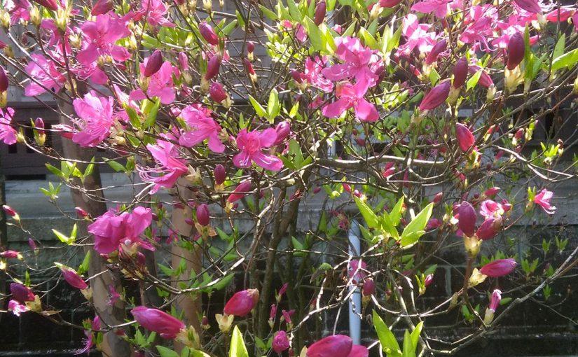 漢詩 四月三十日  村のお婆さんが亡くなられたので哀悼