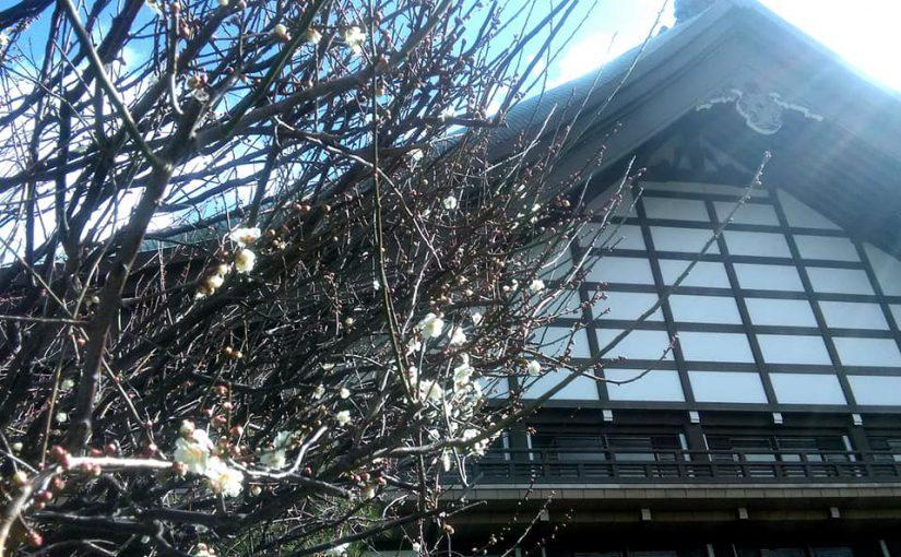 2月21日 花の總持寺を後にして雪の新潟に帰ります❗