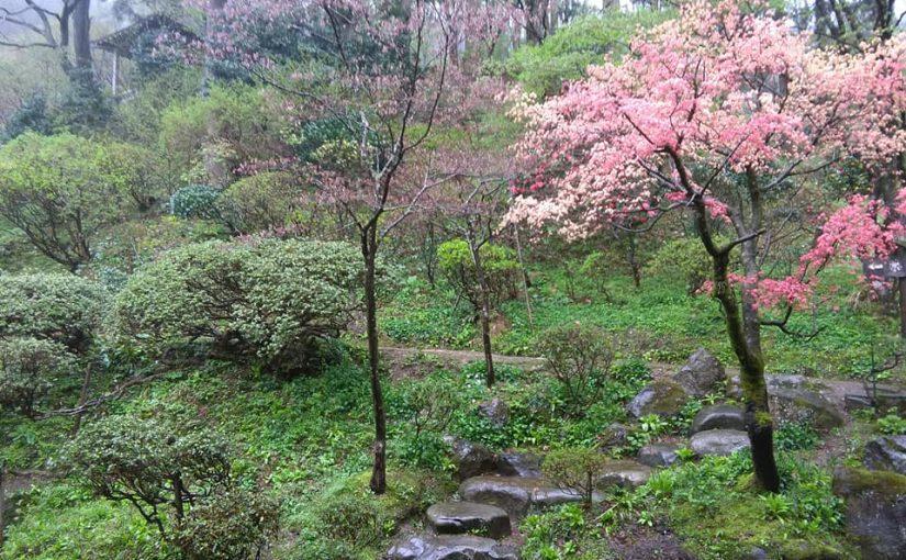 4月25日 山笑う❗リビングからの一枚。 今日は雨です