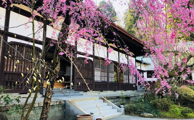 4月18日 越後の北 村上普済寺にも 夢のような春が来ました❗