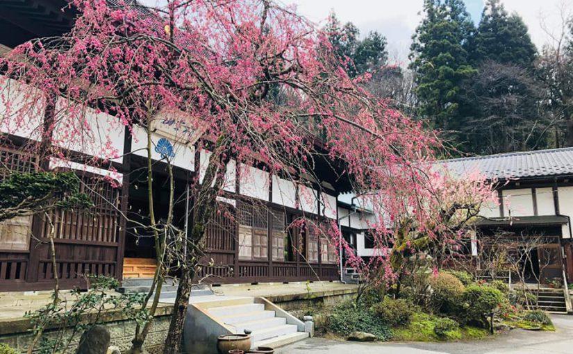 4月16日 正面 前庭に春が来ました❗(昨日は総勢8人で窓拭きでした。)