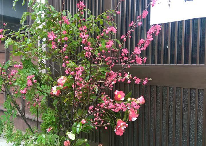 4月26日 明日より庭園公開 春のイベント週間の始まりです。