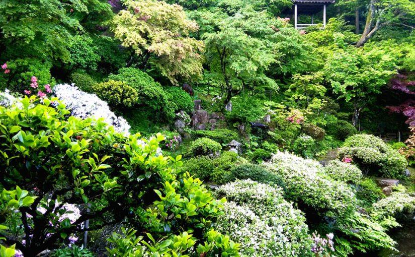 5月15日 緑まさに滴(したた)らんとす。ー新潟村上 普済寺ー