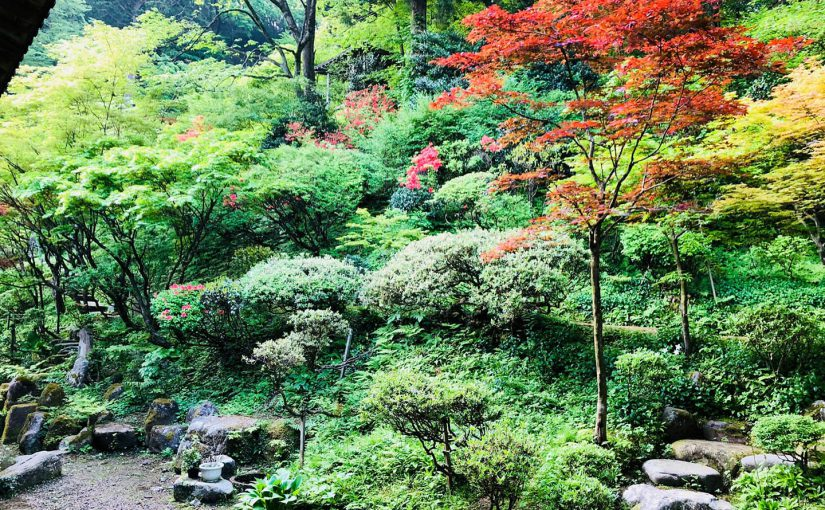 5月12日 ー新潟村上 普済寺ー リビングの窓よりの今朝の庭というか山というかの様子❗