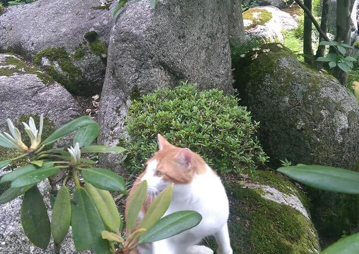 7月8日 今日も日が暮れます❗ 石の間が小径になってます。
