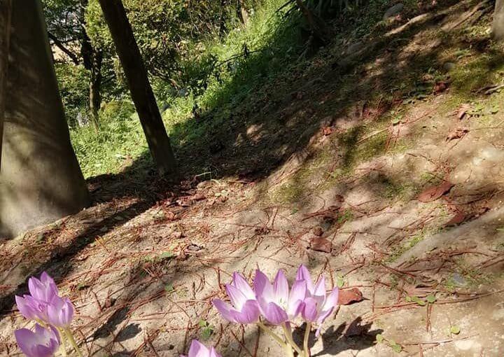 10月3日 いよいよ秋本番です毎日ボツボツ訪ねて来る方あります。