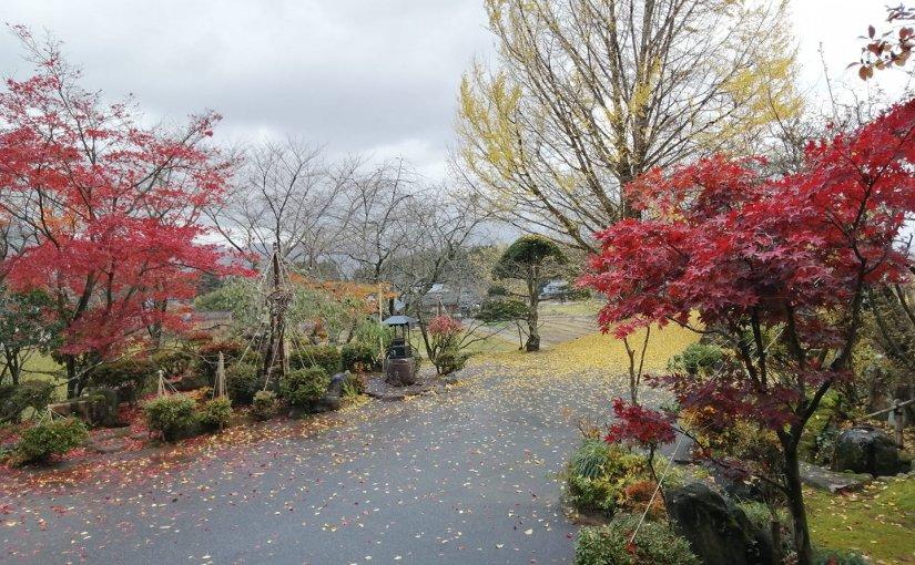 11月19日 掃けば又落ち葉🍂 もの悲しい風が吹いてます。