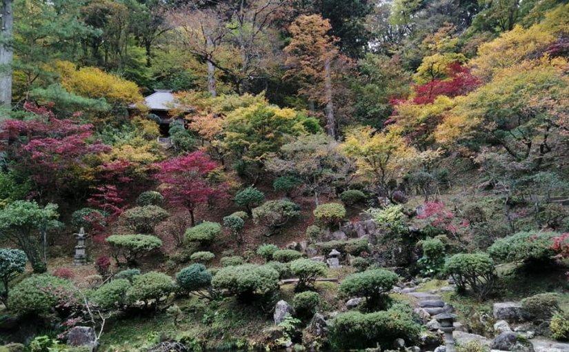 11月8日 遅かった紅葉が日増しに彩りあざやかになってます。 皆様いらして下さい! ぐるーと一回りです!
