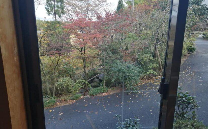 11月6日 おされな喫茶店 「モミの木」 いま赤いのはヤマボウシ。 今年はメグスリノキの紅葉が遅いですね。 楽しみはこれからが本番です。