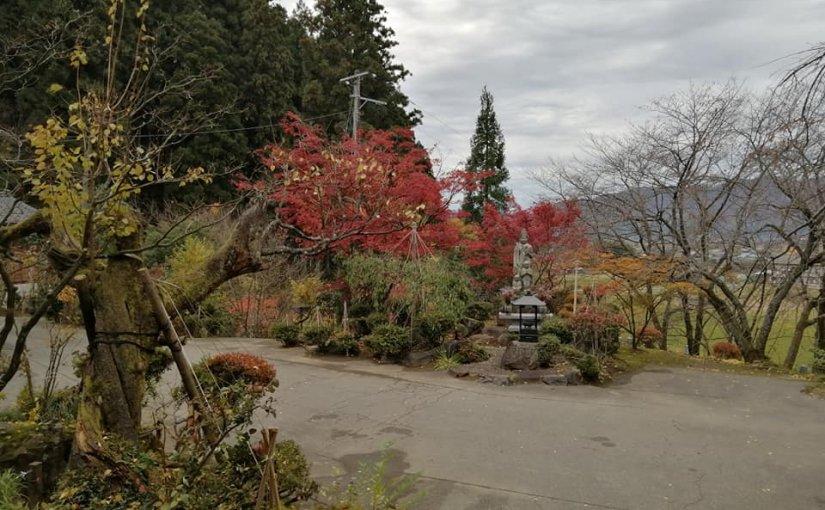 11月18日 今朝の2時間掃き掃除のようすです。オオサカズは紅葉が遅く ようやく盛りとなってます まだまだ見頃です。いらして下さい。