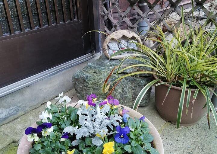 1月22日 玄関の片隅! もう春ですね。