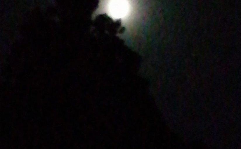 漢詩 6月30日 今夜も坐禅が終わって ふと見れば雲の間から上弦の月が出て 木々の暗い闇に月の光が落ちて来るように螢の点滅が数点。