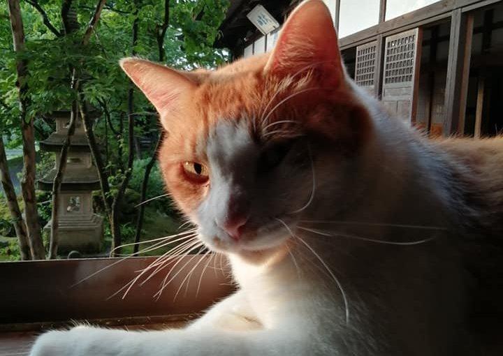 6月30日 ネコのマルです。雨が降ったり止んだり今は風が気持ち良いですね。