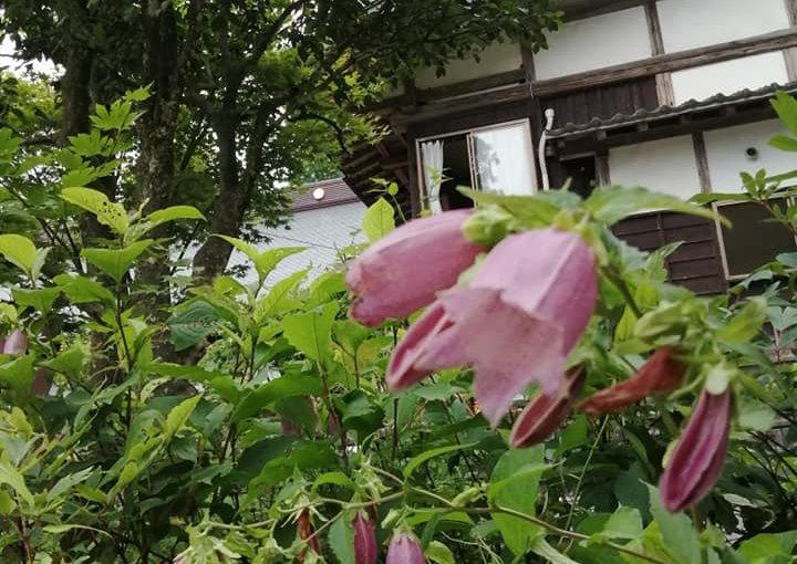 7月1日 新潟県村上市は本格的な雨となり全ての窓や戸を閉めました。