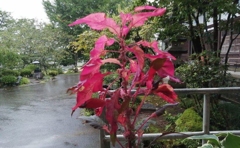 漢詩 9月25日 涼風が吹く初秋のこの日 九十ニ才のご婦人が亡くなられました。