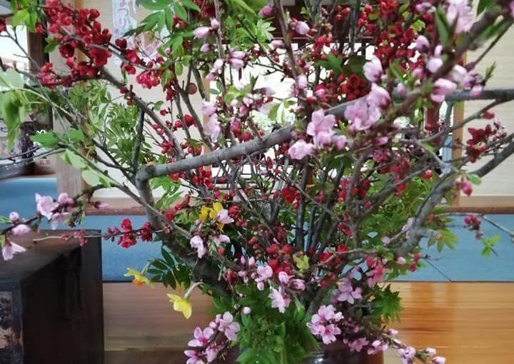 4月14日 桜とサンシュユ(最後に写真あります)が終わったのでボケとモモとナナカマドに活け替えました。