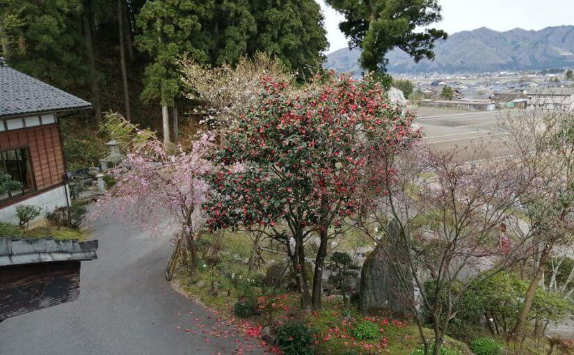 4月13日 新潟県村上市大場沢は薄曇りです。 気温高めでしょうか今朝5時からの坐禅は小さな電気ストーブ無しでした。