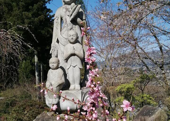 4月15日 枝垂れ源平ハナモモ(今年の雪で傾いたので少し奥に移植)無事に花を付けています。白い八重桜が咲き染めですね。いつもの方が花を供えてくださいました。