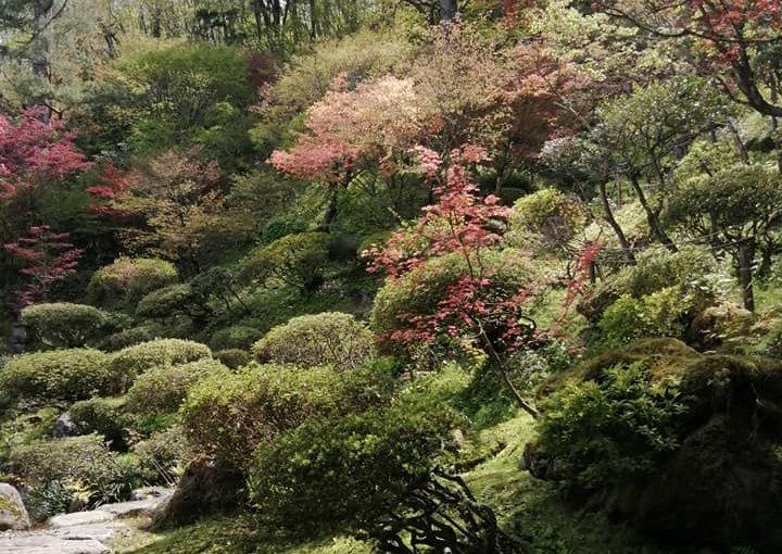 4月24日 10時の休み(一人気ままに) 別角度からパチリ 柔らかい新緑は今だけの贅沢ですね。