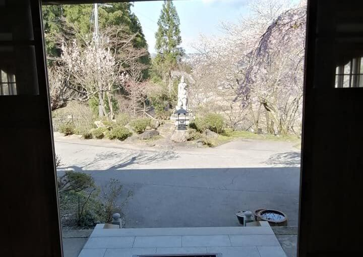 4月10日 ソメイヨシノ桜は満開ですがこれから右の白い八重桜や左手のハナモモや赤いモミジの芽出しとなって1年の中モットモ美しい時となります。