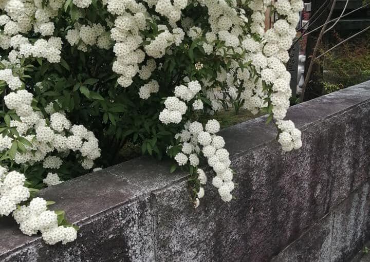 5月8日 今日は新発田市の普門寺で坐禅会です。