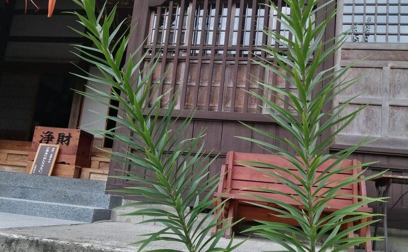 7月26日 土曜日の午後は例会の坐禅会は事情が出来て中止になりましたが新潟市から若い女性3人の坐禅体験希望者と栃木県から来られた方もありクラーの効いた特別の部屋で合計6人での坐禅でした。