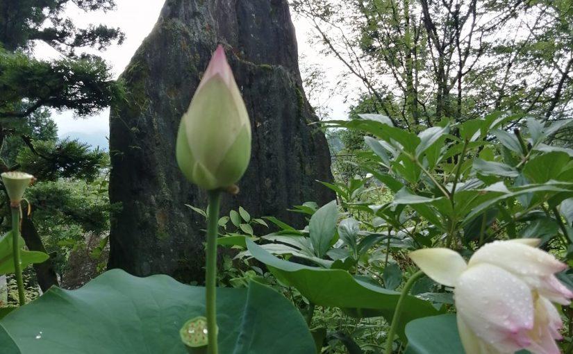 漢詩 7月7日 西来山柏樹寺二十五世 松村賢道師が九十三才を持って昨日遷化(禅僧がなくなること)なされました。