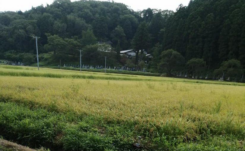 8月29日 今日は日曜日新潟の旅行会社トラベルマスターが募集した団体が10時45分と12時15分の2班に分かれて来ます。